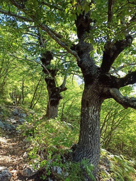 Тропа на Румию сначала идёт через лес