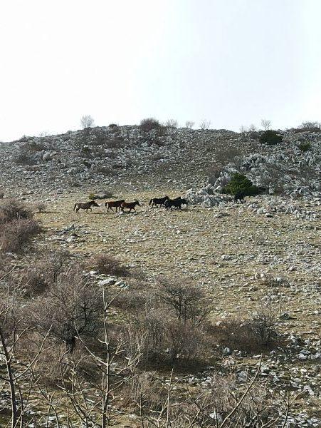 Лошади на склоне