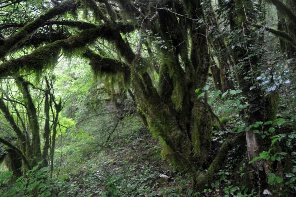 Зачарованный лес в каньоне Мртвицы летом