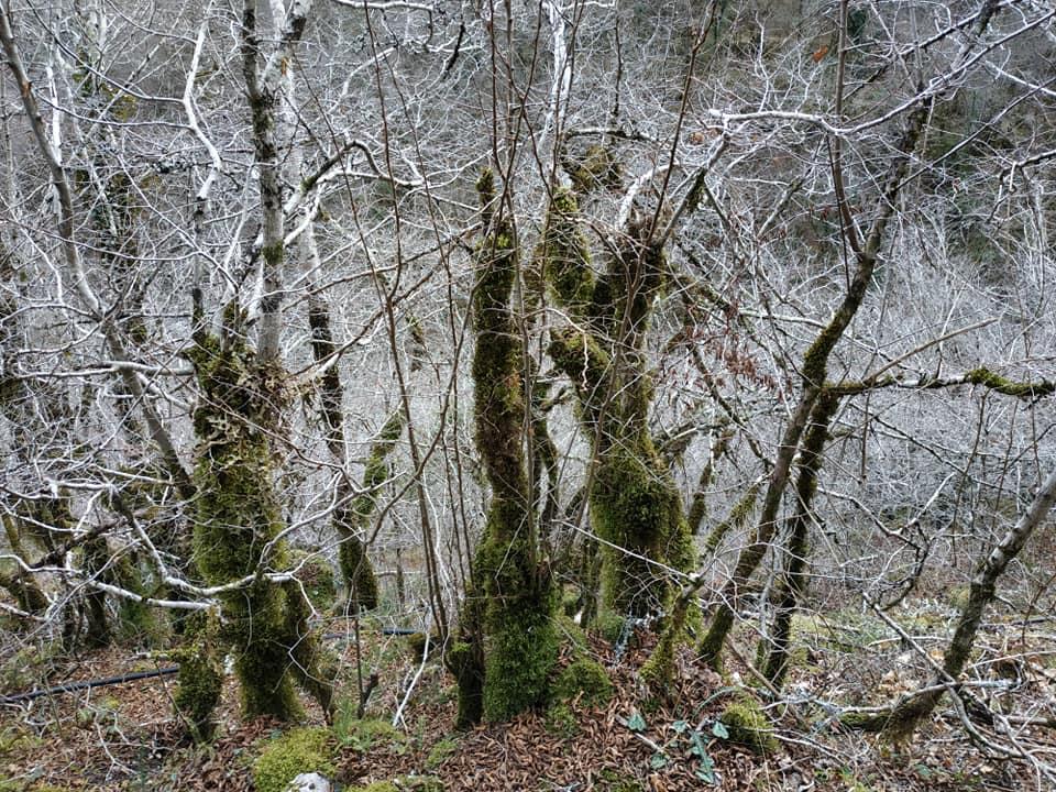 Зачарованный лес в каньоне Мртвицы зимой