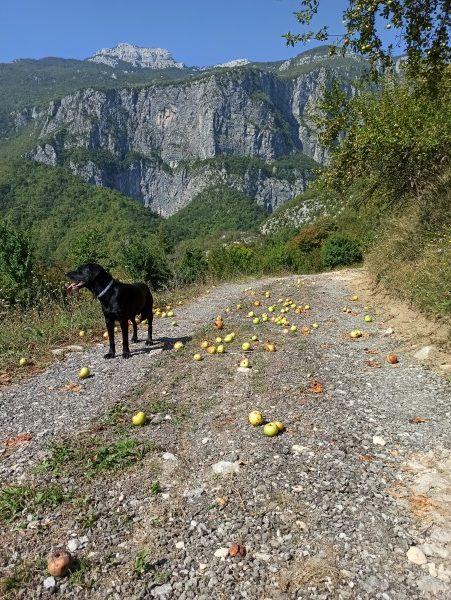 Черногория. Осенняя дорога в каньоне Мртвицы